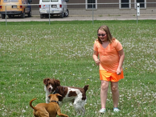 Dogs play at the Bark Until Dark off-leash dog park. The park hosted the second Humane Society of Ottawa County dog show Sunday, with 46 dogs competing for prizes.