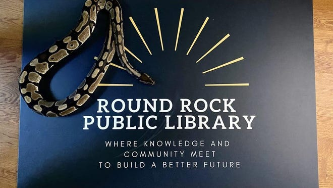 The Round Rock Public Library's popular pet ball python, Miss Rockssane, poses with a photo of the library card.