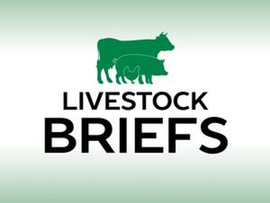 Livestock-briefs.jpg