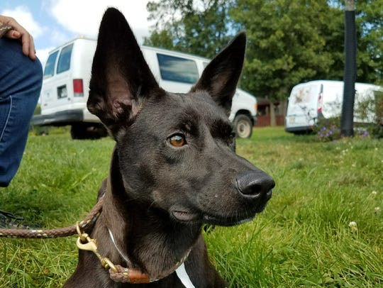 Dogs from Texas shelters arrived at the Somerset Regional
