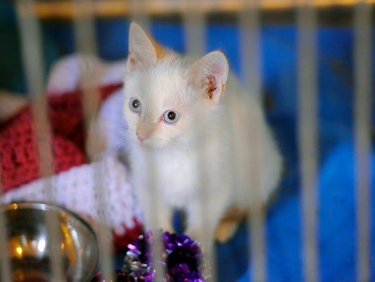 -feral cats 11.jpg_20140731.jpg