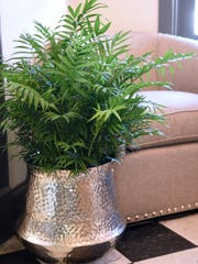 A Parlor Palm adds a splash of color to brighten up