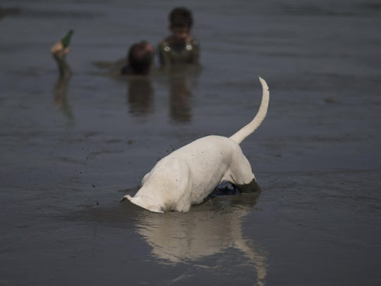 "A dog goes into the mud during the traditional ""Bloco"