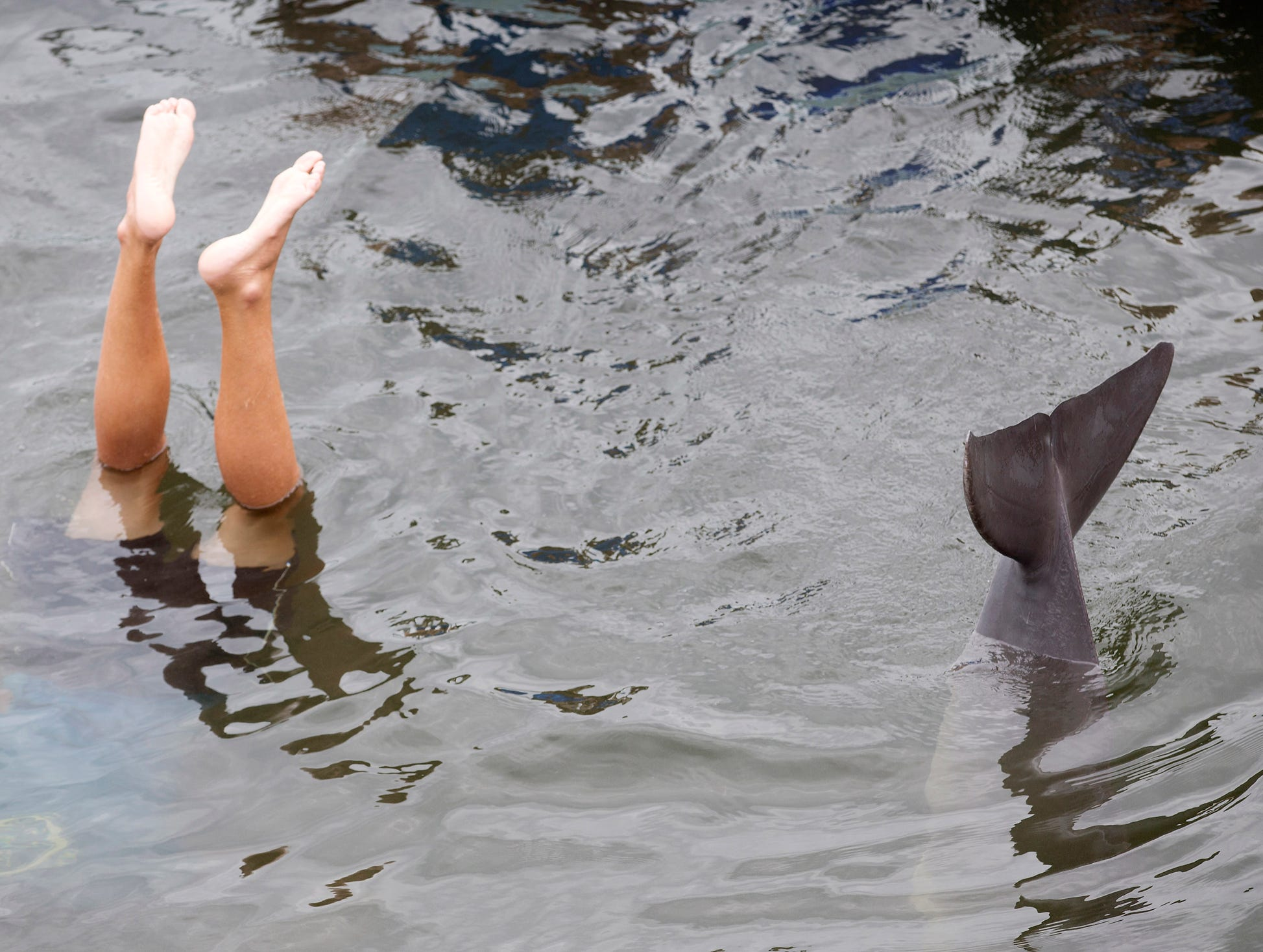 Tanner copies the behavior of trainer Wade Davey, left, during a demonstration at the Dolphin Research Center.
