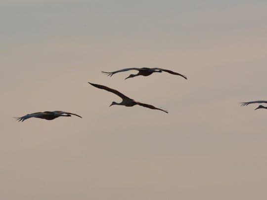 The annual Midwest Crane Count took place last weekend. It's an example of volunteers rising to the occasion.