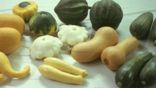 The cucurbits family includes a variety of summer squashes.