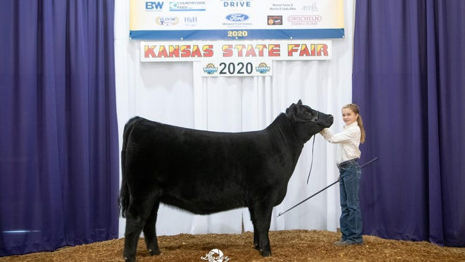 MLA Proven Queen 901 won reserve grand champion female at the 2020 Kansas State Fair Junior Angus Show from Sept. 12-13 in Hutchinson. Cheyenne Brunker, Ottawa, owns the March 2019 daughter of Silveiras Style 9303. Shane Meier, of Stonewall, Texas, evaluated the 46 entries.