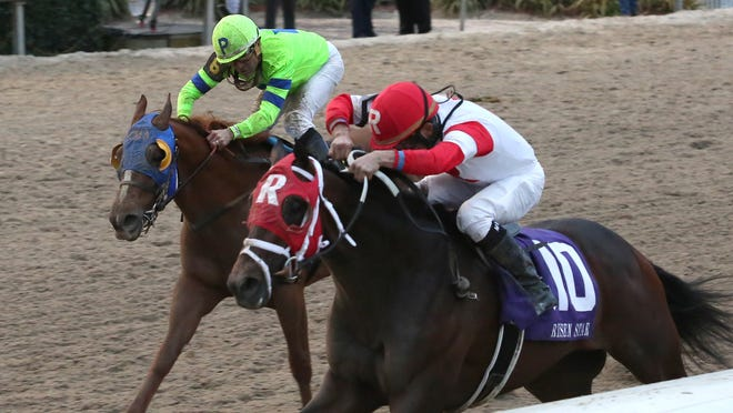 Ken and Sarah Ramsey's International Star (inside), shown edging War Story to win the Risen Star under Miguel Mena, goes for a sweep of the Fair Grounds' three Kentucky Derby preps in the $750,000 Louisiana Derby.