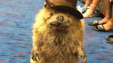 Taylor Lewan's stuffed beaver a fixture in Titans locker room