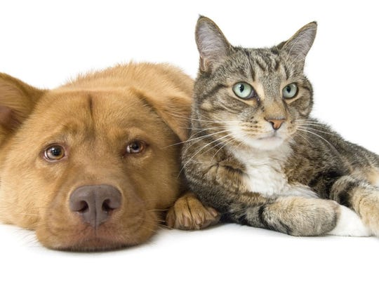 Dogs and cats can be contaminated by chemicals in the environment just like people.  Submitted photo Dog and Cat together wide angle