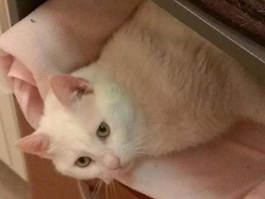 found-whitecat