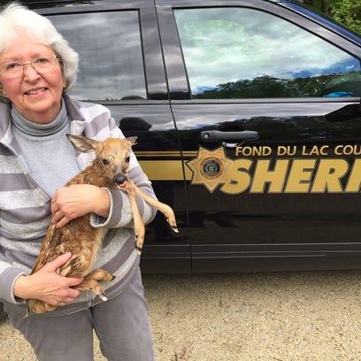 Judy Stephensen, a certified wildlife specialist near
