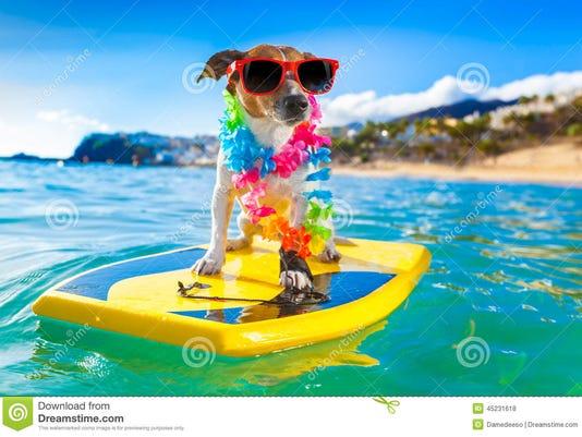 0613-ynsl-furever-surfing-dog.jpg