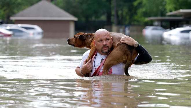 Louis Marquez carries his dog Dallas through floodwaters after rescuing the dog from his flooded apartment April 19, 2016, in Houston. Storms have dumped more than a foot of rain in the Houston area, flooding dozens of neighborhoods.