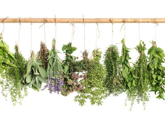 hanging fresh herbs. basil, rosemary, sage, thyme, mint, oregano