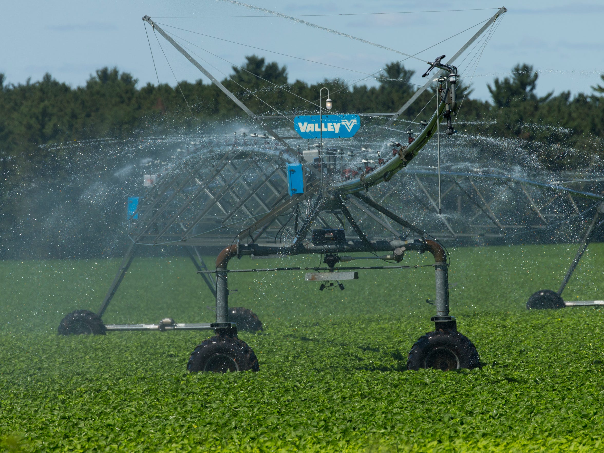 An irrigation system waters crops Wednesday in Coloma,