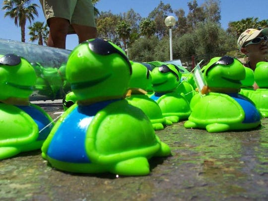 As many as 2,000 rubber turtles will swim downstream