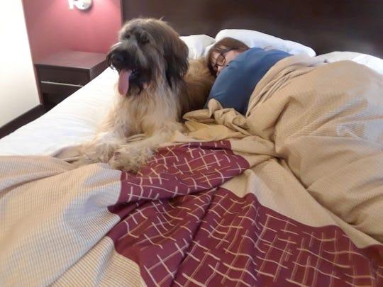 Service Dogs Regulation (2)