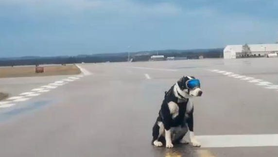 A 7-year-old border collie named Piper has won the hearts of hundreds of Internet users after a photo of him working at the Cherry Capital Airport in Traverse City was posted on a popular online social forum.