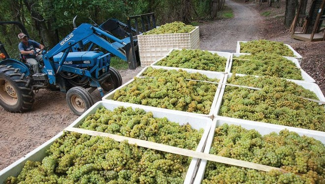 The Biltmore Estate does grow some of its own grapes, but 80-90 percent come from partner vineyards.
