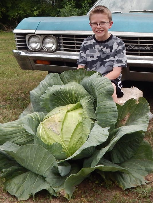 Gardener State: Cashing in on cabbage PHOTO CAPTION