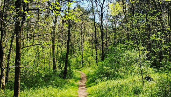There are eight miles of peaceful trails weaving through the park.