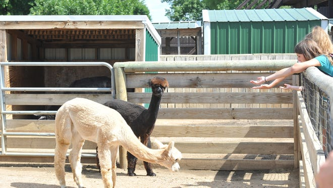 The Great Plains Zoo is inviting the public to help select names for two female one-year-old alpacas living at the Hy-Vee Face-to-Face Farm.
