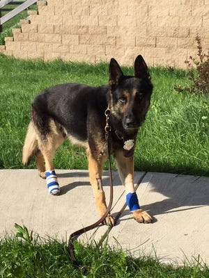 Ernie, a retired Covington police K-9 unit, died of cancer on Friday.