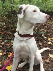 Howie Barnwell, a 10-month old Pointer mix is up for adoption. To complete an application or to see all adoptable pets, visit: www.ehrdogs.org or call 973-664-0865.