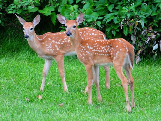 -GPG Urban Deer010.jpg_20140716.jpg