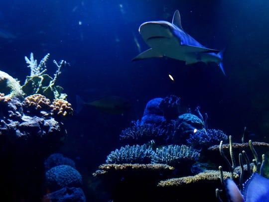Inside the Shreveport Aquarium.