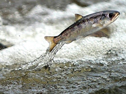 635951113495129459-Salmon-Davi.jpg
