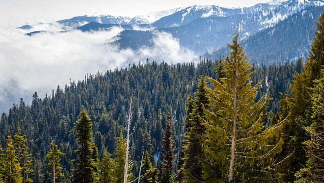 The most easily accessed mountain area within Olympic National Park is Hurricane Ridge. Sunrise and sunset views are stunning from the ridge, as are the panoramic views of the park on clear days.