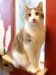 Nico is a 4-year-old stray. He is sweet and affectionate