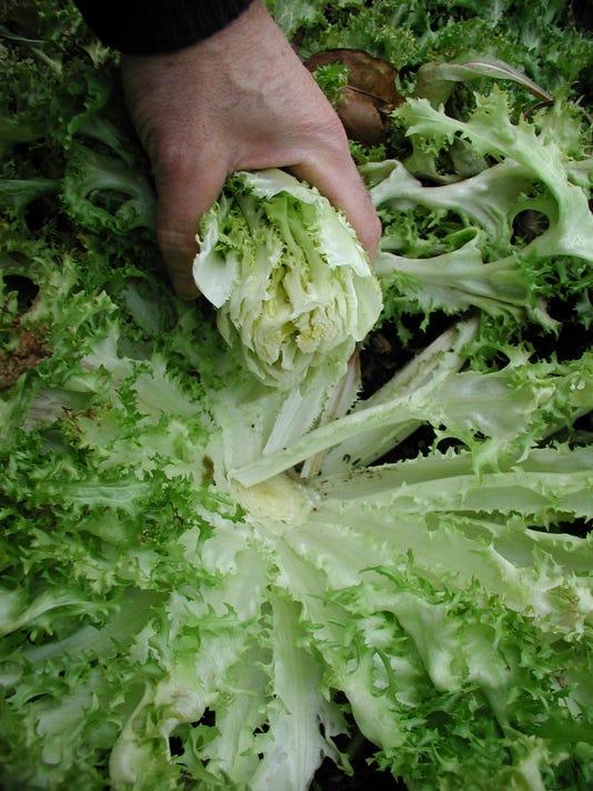 636142372617360922-Gardening-Blanching-Robe.jpg