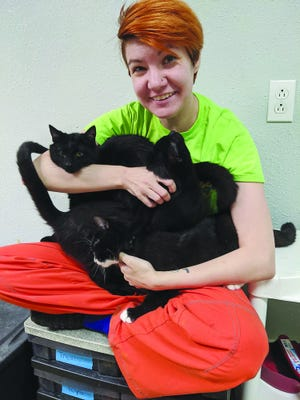 Pratt Area Humane Society manager April Hemphill holds a lap full of friendly felines, just a few of more than 10 available for adoption in Pratt.