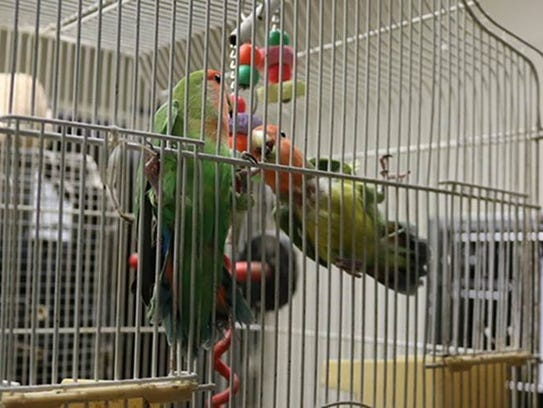 A pair of love birds were among the rescued animals.