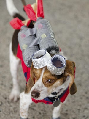 Stanley the beagle took first place in the Alien Pet Contest at Sputnikfest on Sept. 12.