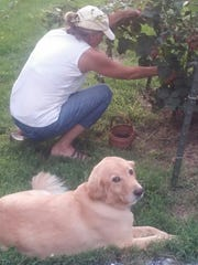Patty Powell picking blackberries while Michelle rests.