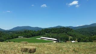 Ramsey Dairy Farm - Fairview NC