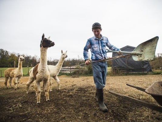 Jacob Stoner, 13, cleans up after the 14 alpacas that live on the family farm at Big Rock Alpaca Farm on Oct. 27 near East Berlin.