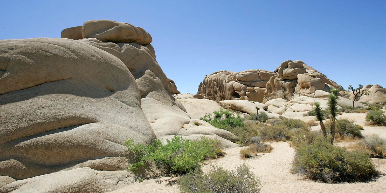 Bees cause Joshua Tree National Park officials to close popular campground for two weeks