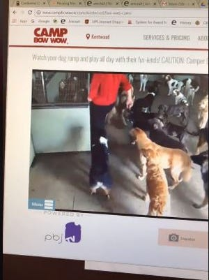 A video of a franchise owner kicking a dog surfaced online Monday.