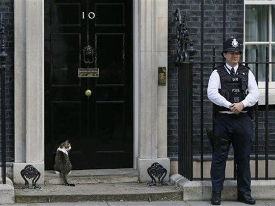 Larry the Downing Street cat sits on the steps of 10 Downing Street in London, after Britain's Prime Minister David Cameron left to face prime minister's questions for the last time Wednesday. Cameron will be appearing before Parliament as prime minister for the last time before handing over to successor Theresa May.