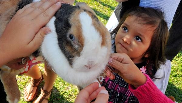 Jael Delos Santos, 2, of Indialantic pets Thumper the rabbit during the Eastminster Presbyterian Church in Indialantic petting zoo on the church lawn before Sunday morning's Palm Sunday service.
