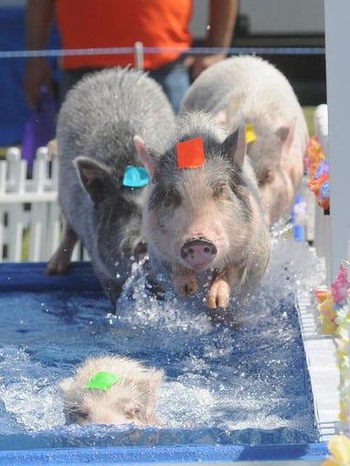Day 4 at the Ottawa County Fair, Thursday, July 17, 2014