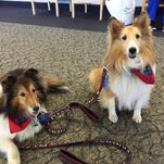 Jenna and Ziggy, destressing passengers last week at Albany International Airport.