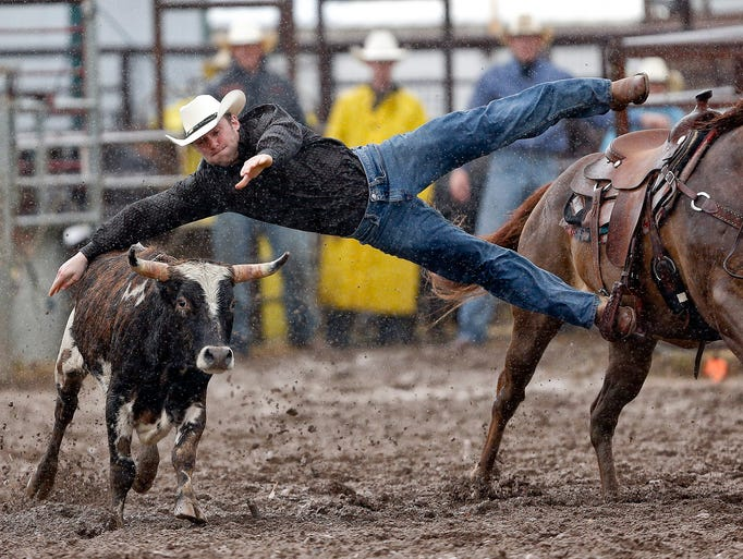 Caleb Gee of Billings jumps from his horse in the steer wrestling event Saturday, June 14, 2014, during the 54th Annual Belt Rodeo in Belt. Gee missed the steer in the rain and was given a score of no time.