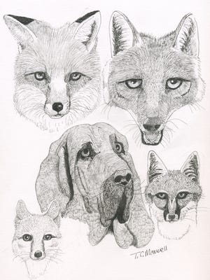 Illustrated are red fox (top left), coyote (top right), domestic dog (center), Swift fox (bottom left) and Common gray fox (bottom right).