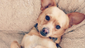 Lauren Conrad's puppy Fitz is about as photogenic as they get, posing adorably for this Instagram shot.